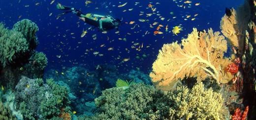 du-lich-thai-lan-dao-Coral-8